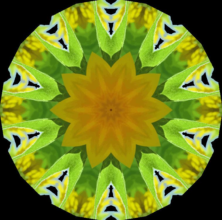 Sunflower Seed,Flower,Symmetry