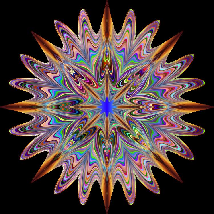 Symmetry,Line,Organism