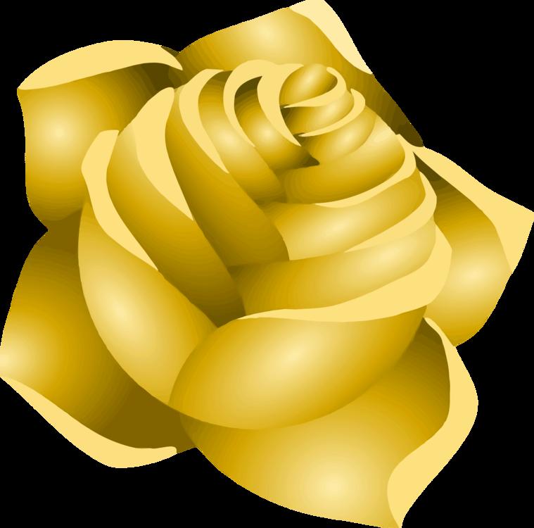 Petal,Flower,Yellow