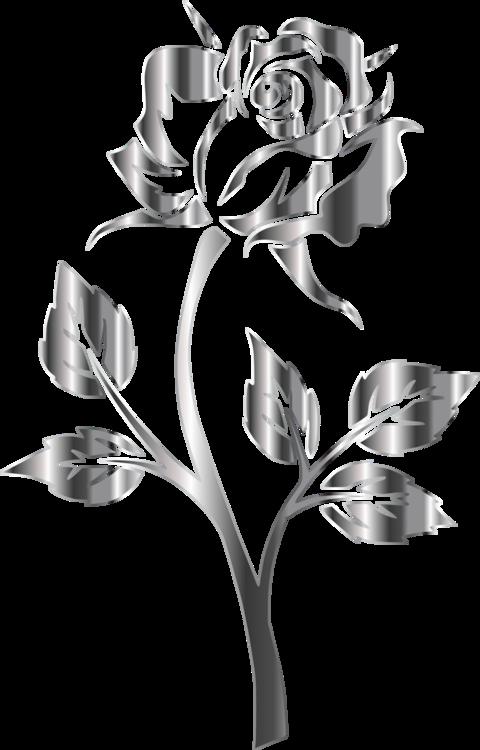 Plant,Flora,Rose Order