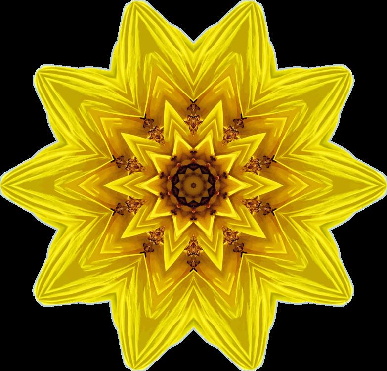 Petal,Sunflower Seed,Flower
