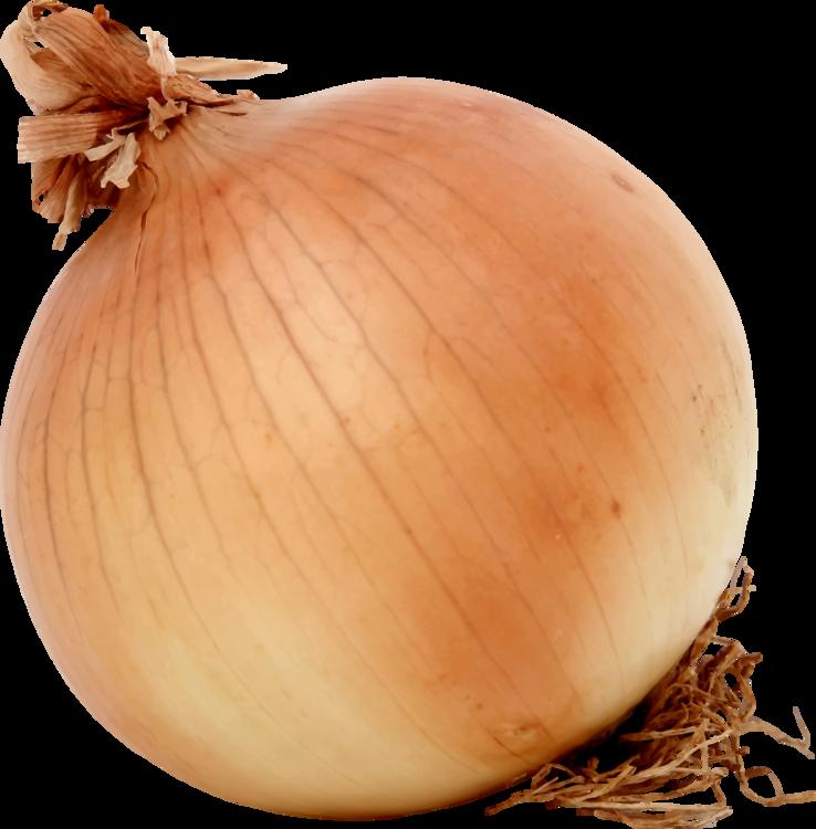 Onion,Food,Winter Squash