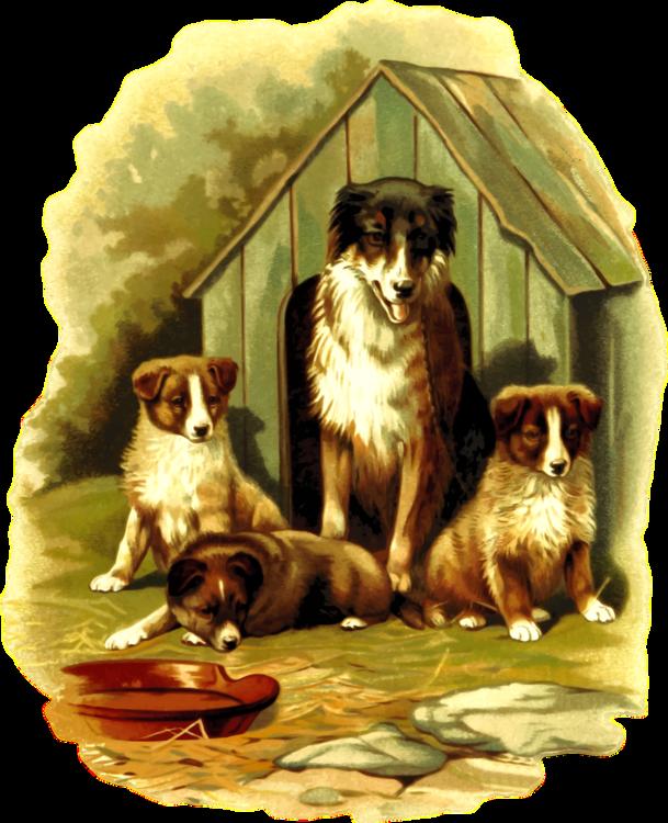 Dog Like Mammal,Dog Breed Group,Carnivoran