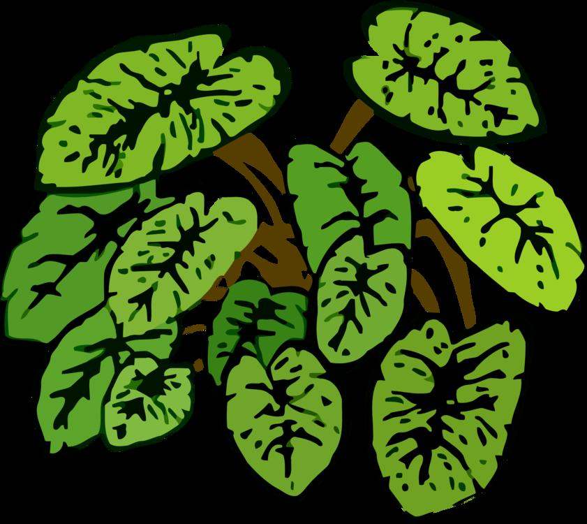 Plant,Leaf,Toad