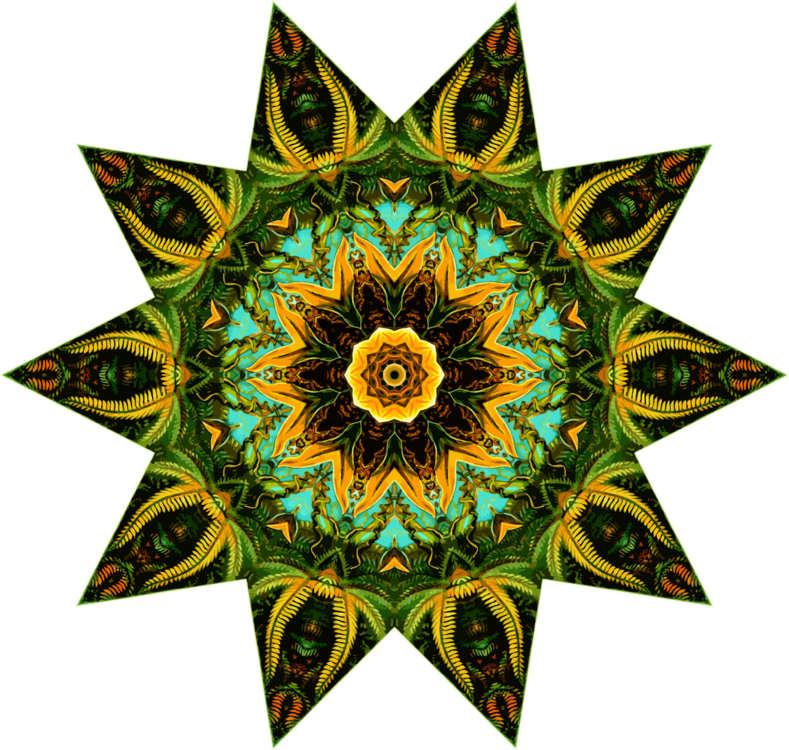 Flora,Symmetry,Sunflower