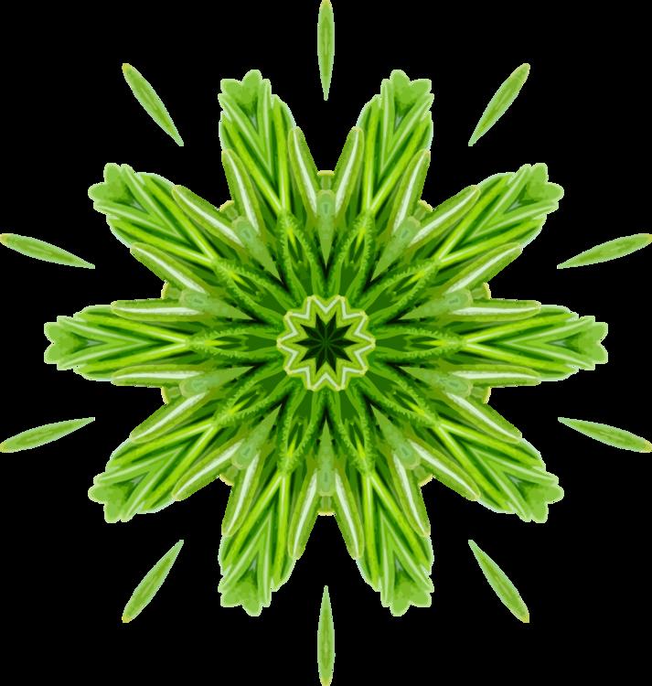 Plant Stem,Chrysanths,Plant