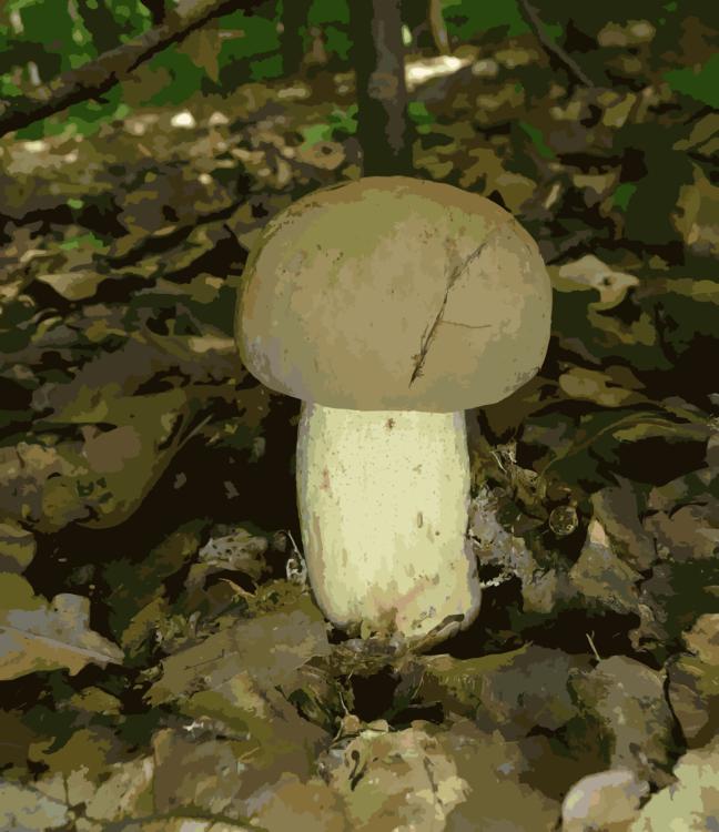Biome,Penny Bun,Mushroom