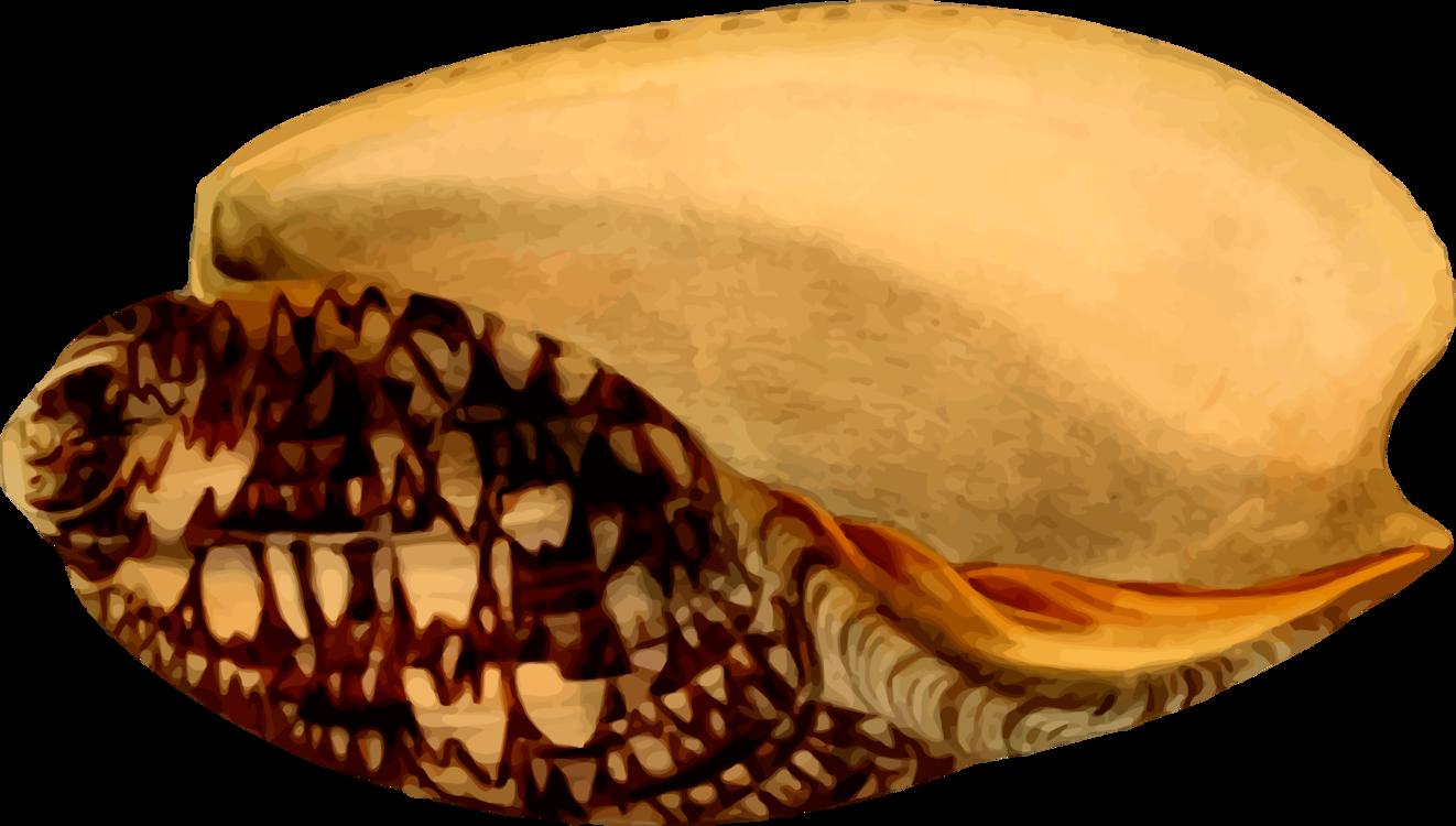 Snail,Conch,Seashell