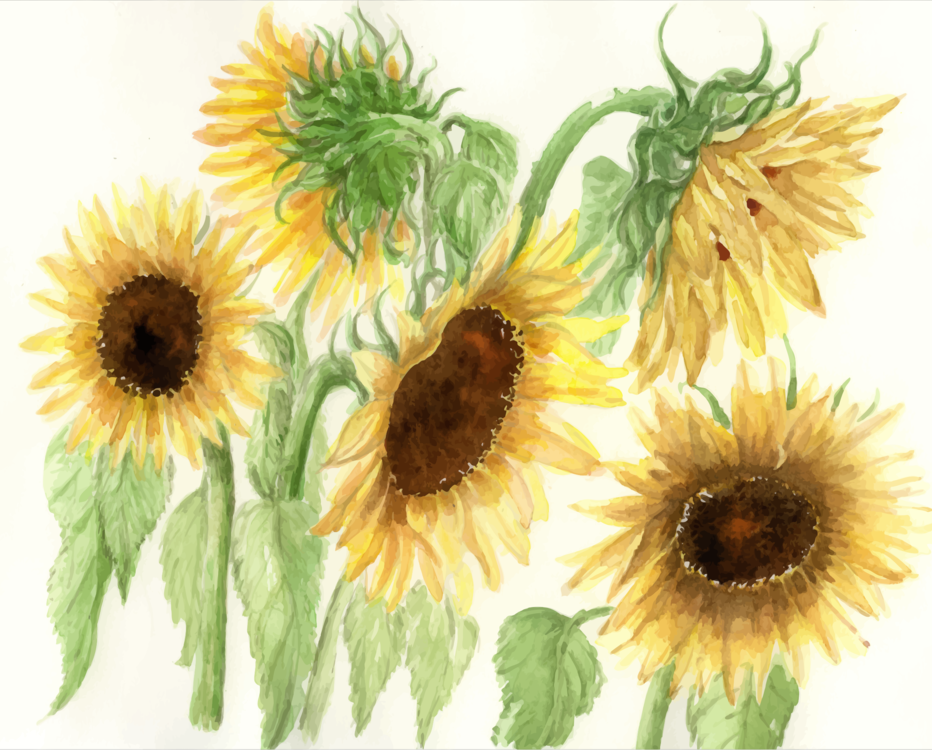 Sunflower Seed,Watercolor Paint,Flower