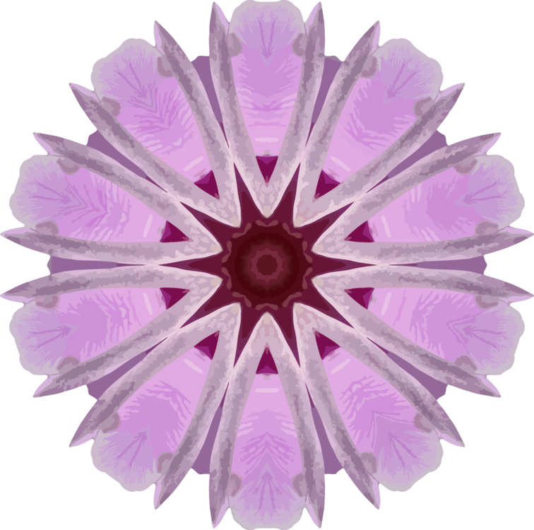 Pink,Flower,Lilac