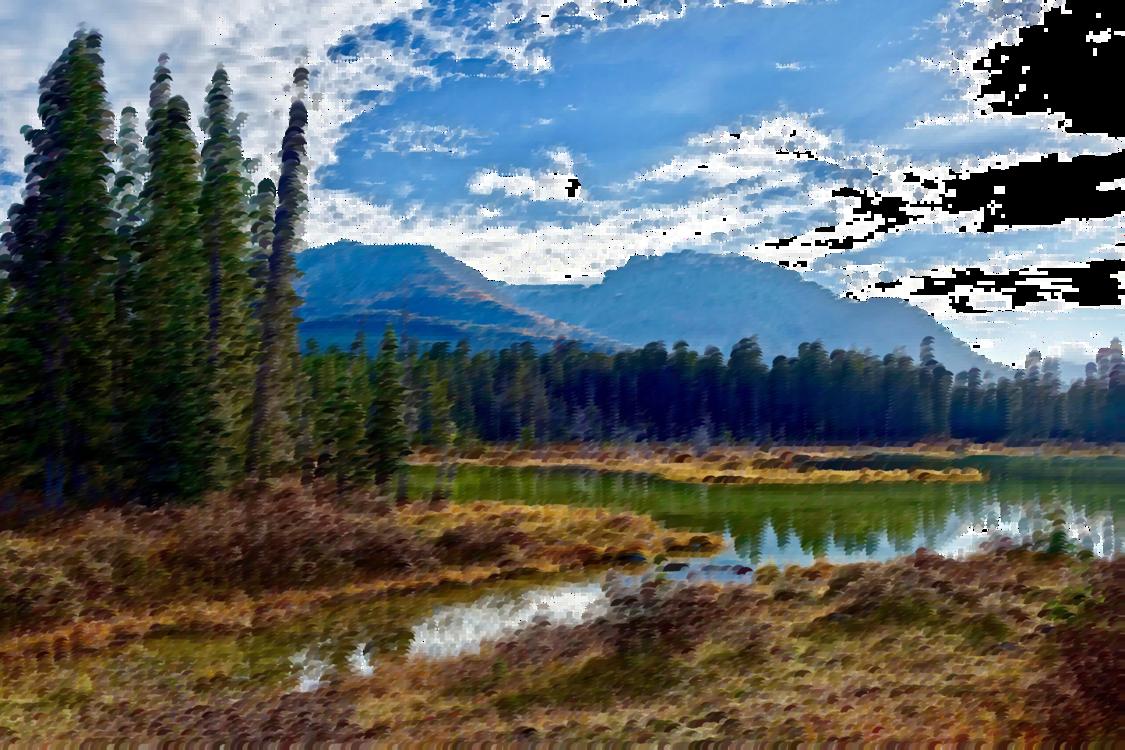 Meadow,Wilderness,Spruce Fir Forest