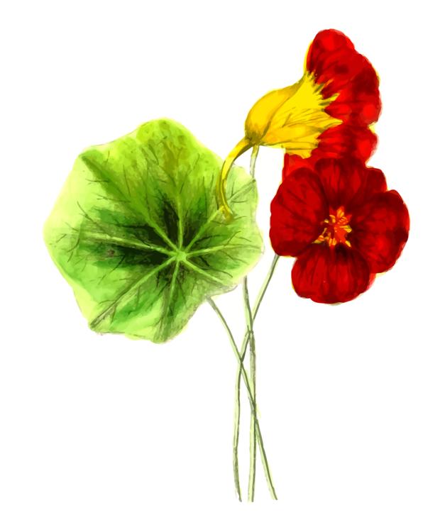 Plant,Flower,Leaf