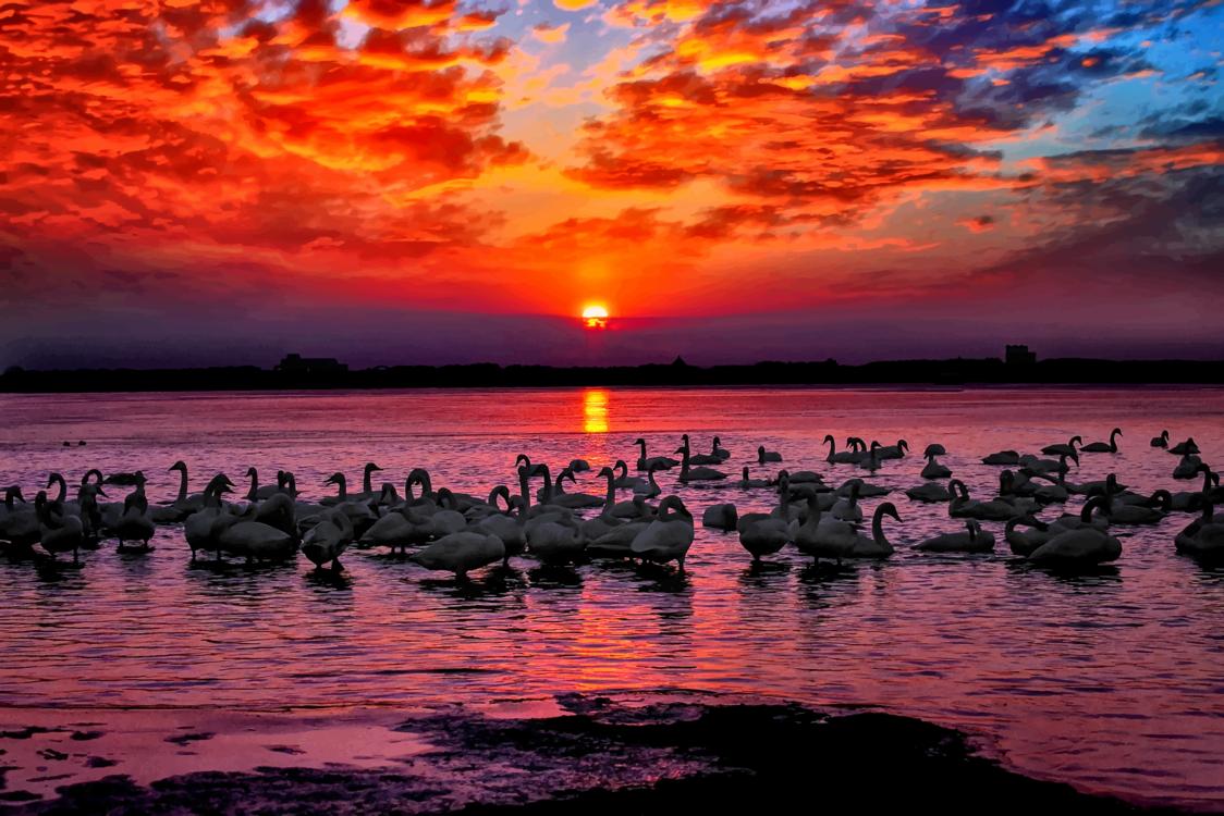 Evening,Reflection,Dusk