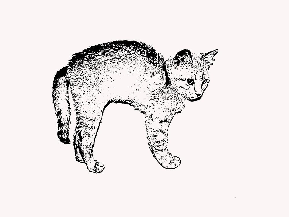 Art,Wild Cat,Carnivoran