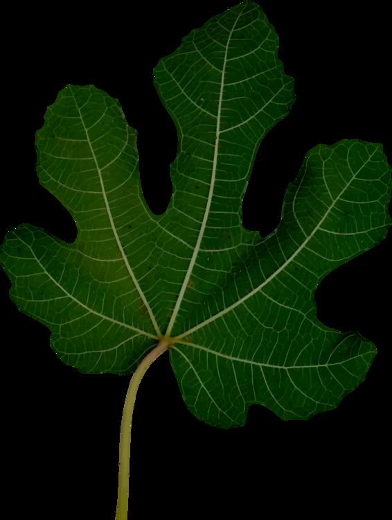 Tree,Plant,Fruit