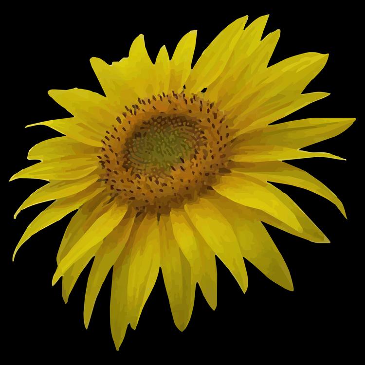 Sunflower Seed,Pollen,Close Up