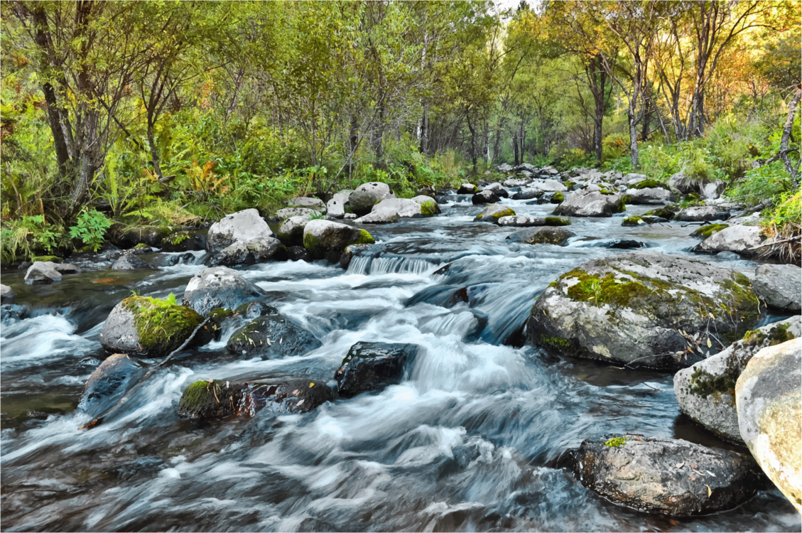 Creek,Stream,Stream Bed