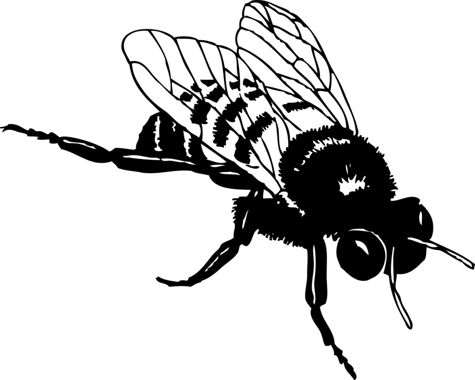 Fly,Honey Bee,Monochrome Photography