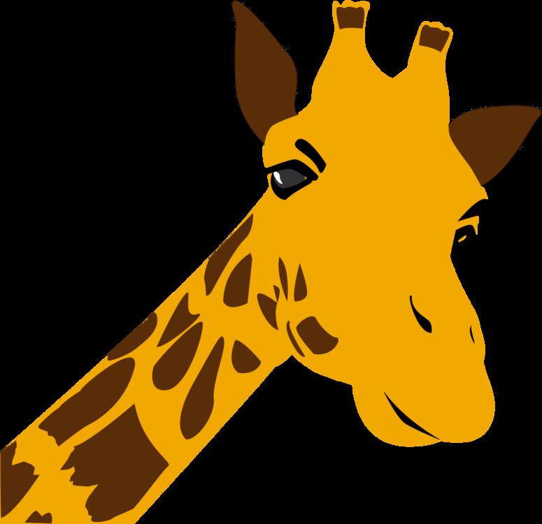 Giraffidae,Wildlife,Carnivoran