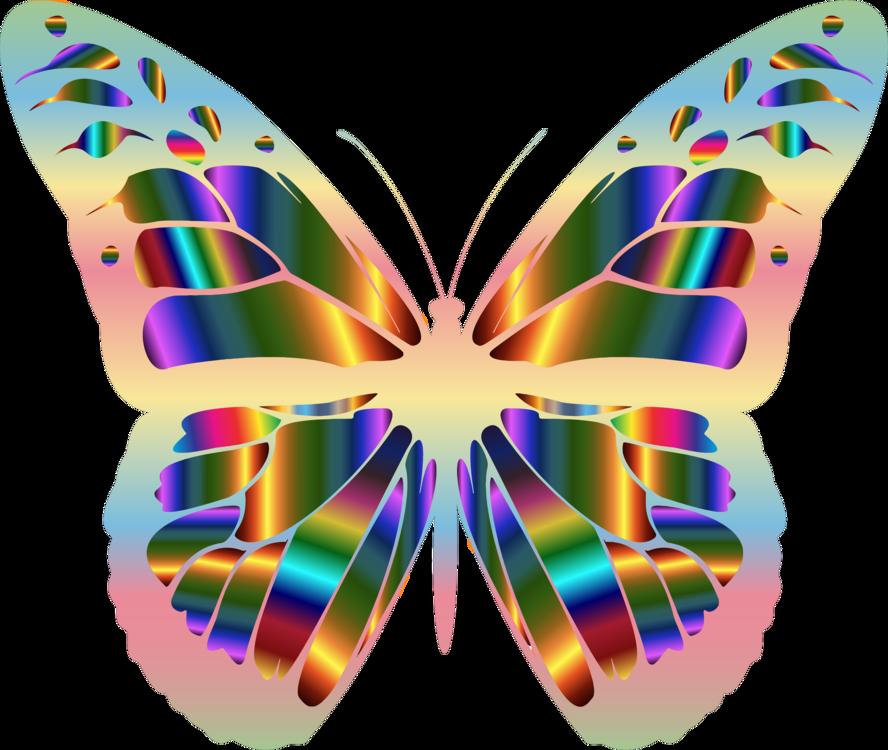 Butterfly,Symmetry,Moth
