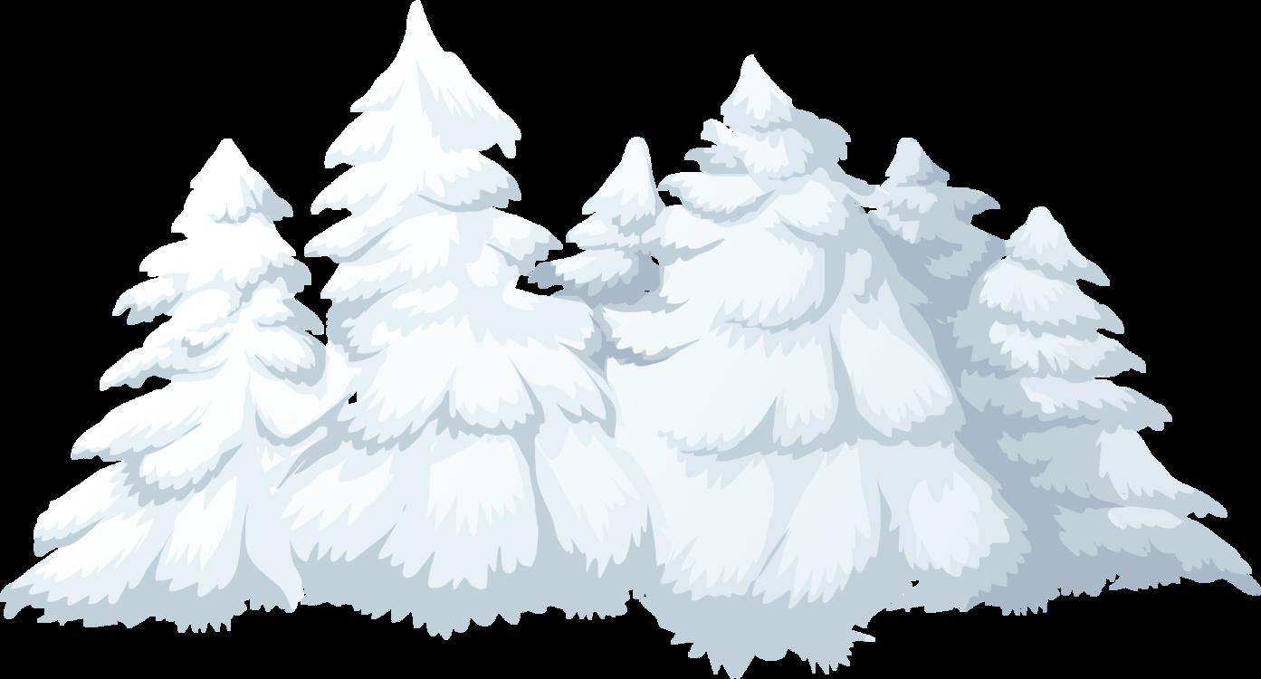 Fir,Pine Family,Tree