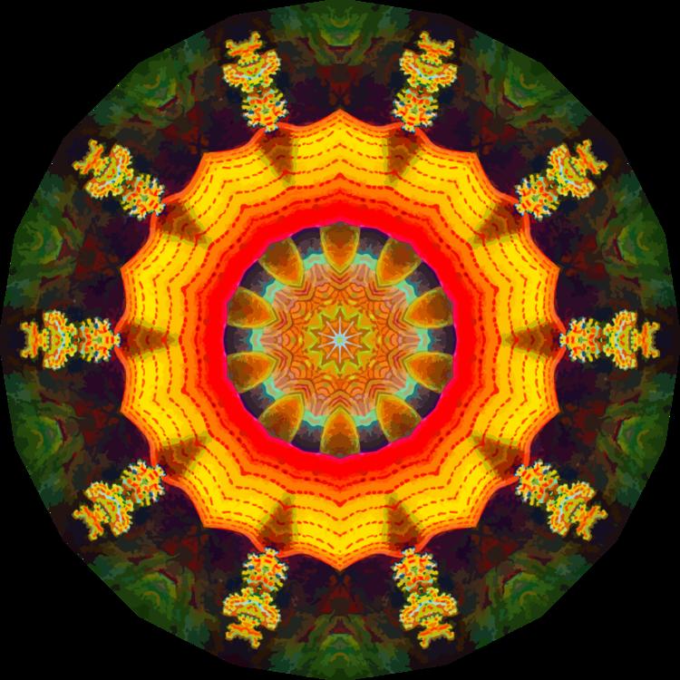 Circle,Organism,Symmetry