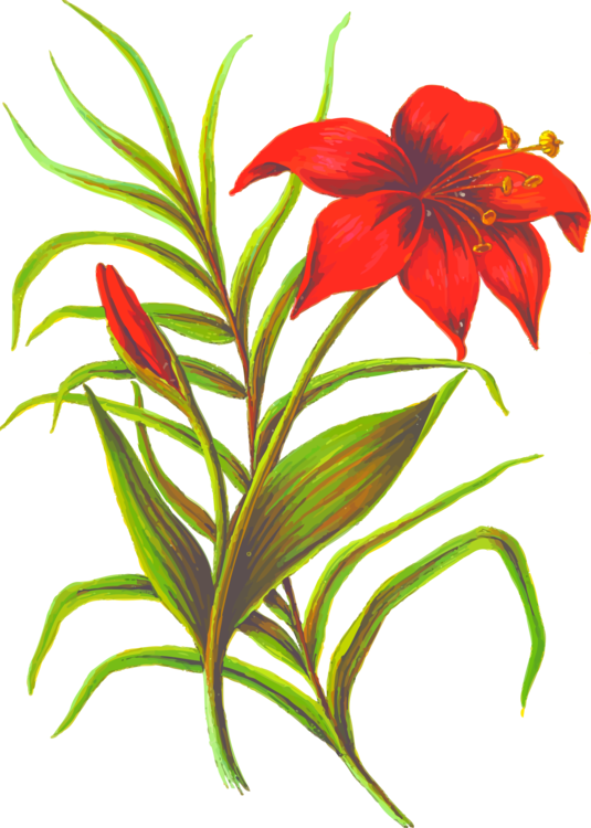 Plant,Flora,Terrestrial Plant