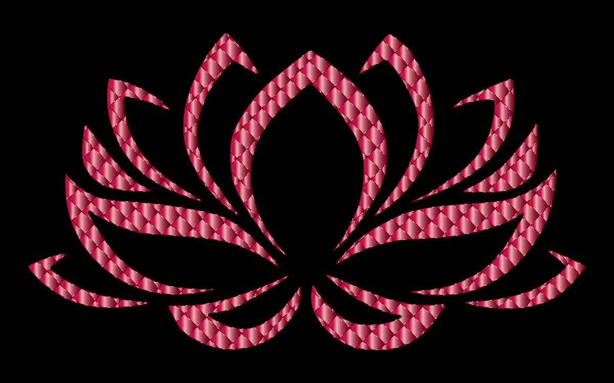 Sacred Lotus Egyptian Lotus Nymphaea Lotus Flower Central Pain