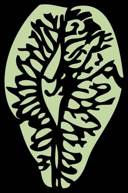Flower,Leaf,Organ