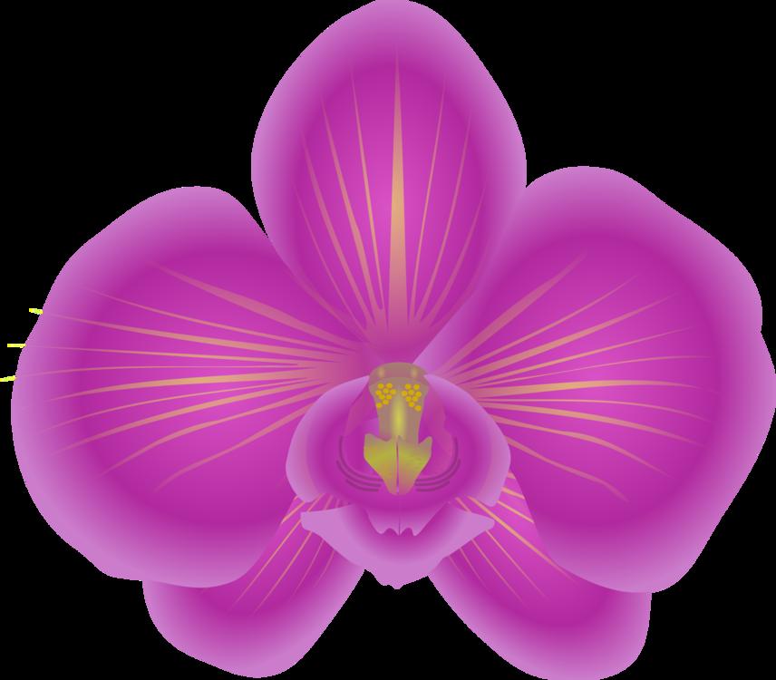 Plant,Flower,Lilac