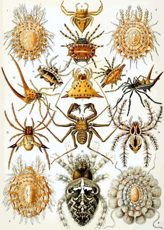 Symmetry,Pollinator,Invertebrate