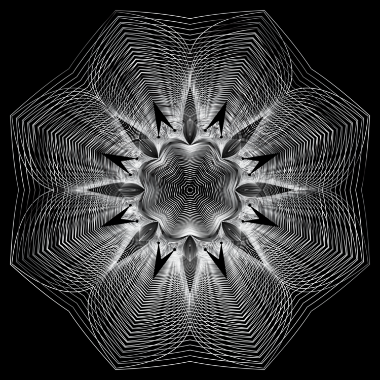 Symmetry,Monochrome Photography,Petal