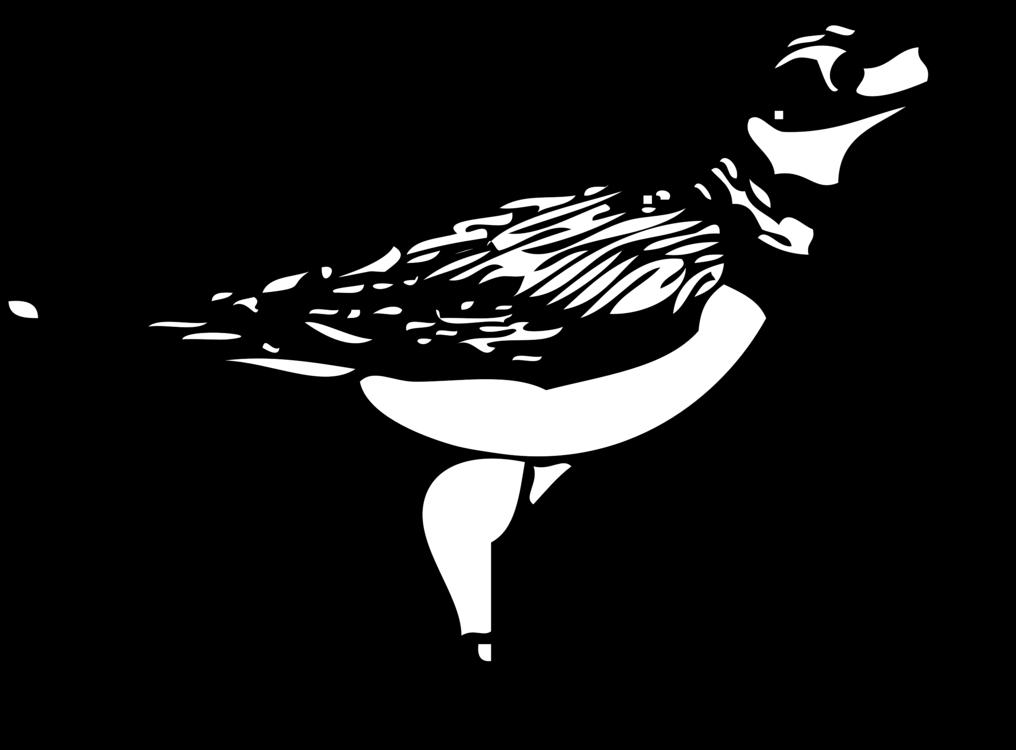 Line Art,Wildlife,Water Bird