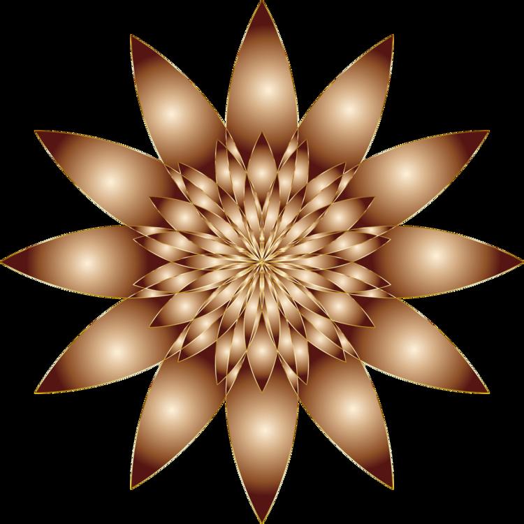Petal,Line,Flower