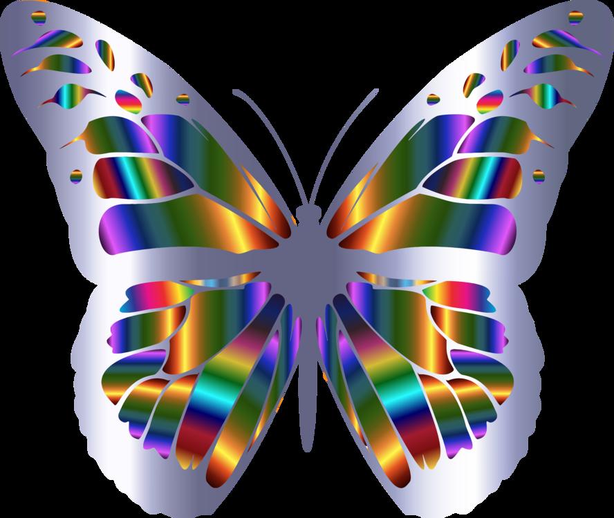 Butterfly,Symmetry,Purple