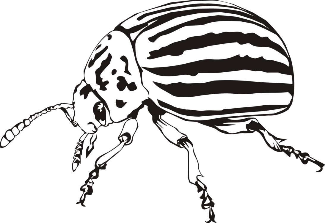 Monochrome Photography,Weevil,Beetle