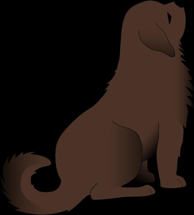Snout,Wildlife,Carnivoran