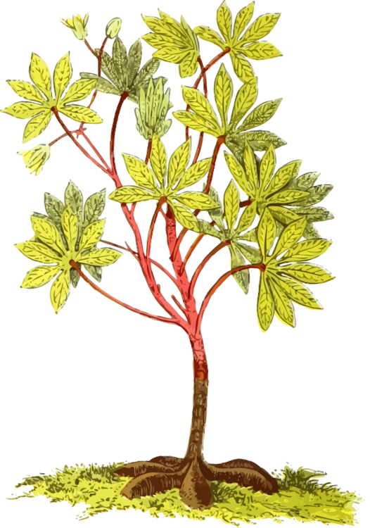 Plant,Flower,Tree