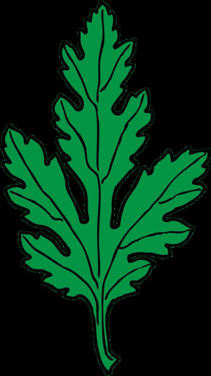 Crown daisy Leaf Drawing Feverfew CC0 - Plant,Leaf,Artwork CC0 Free