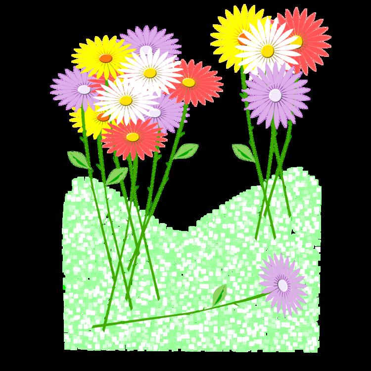 Chrysanths,Plant,Flora
