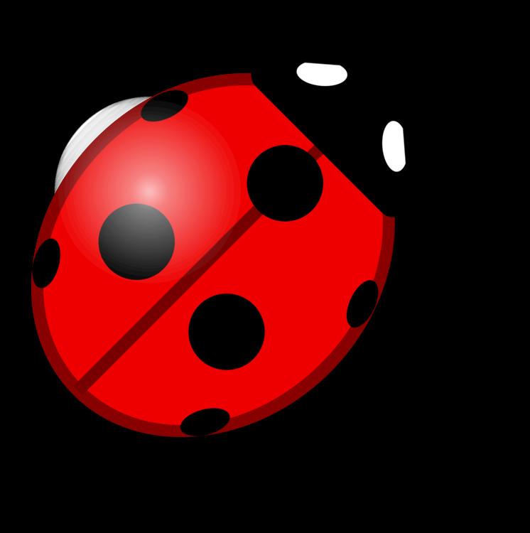 Ladybird,Invertebrate,Insect