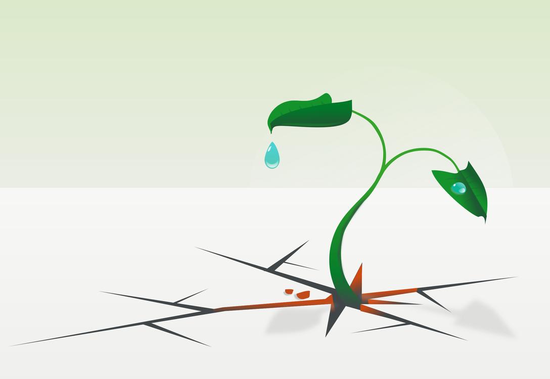 Graphic Design,Plant,Leaf