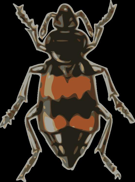 Fly,Weevil,Invertebrate