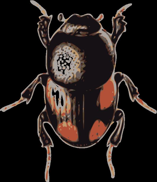 Weevil,Dung Beetle,Invertebrate