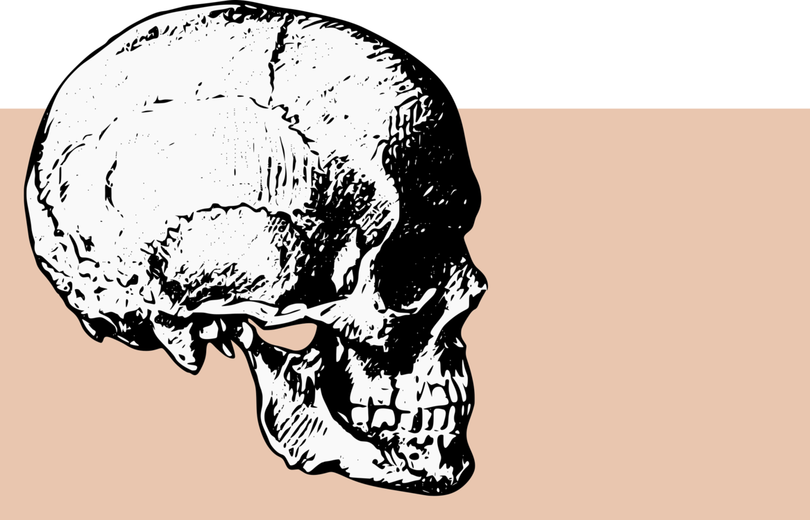 Skull Computer Icons Bone Drawing Human Skeleton Free Commercial