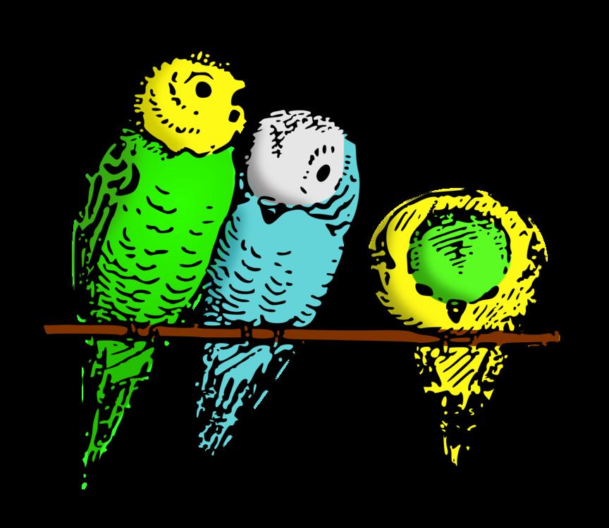 Parrot,Yellow,Perico