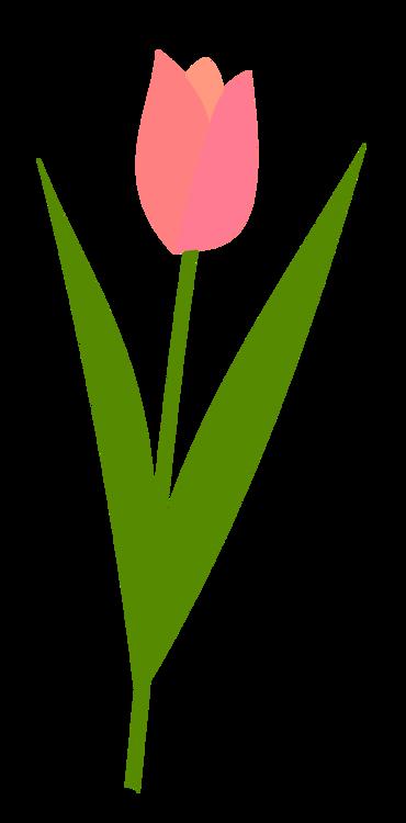 Computer Wallpaper,Heart,Plant