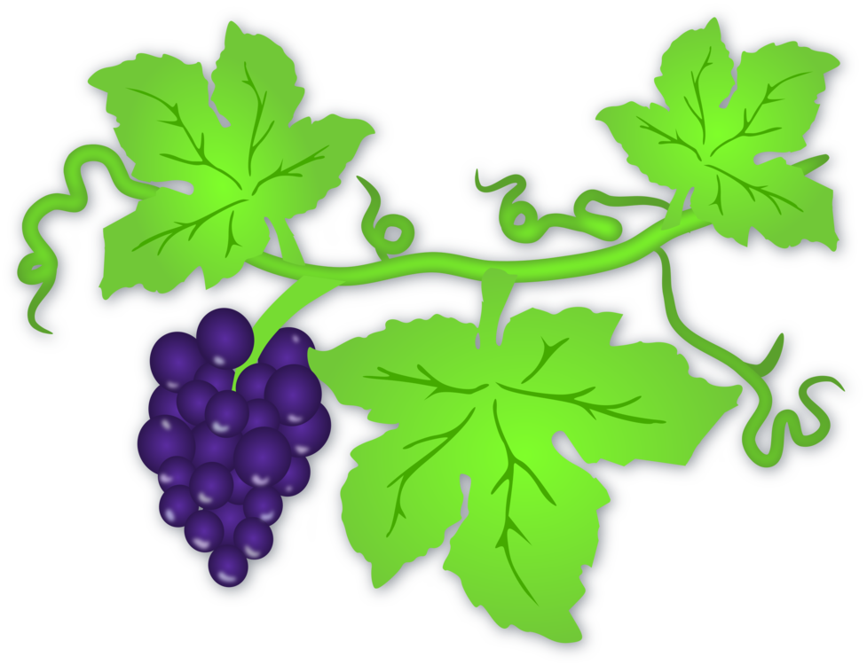 Plant,Leaf,Grapevine Family
