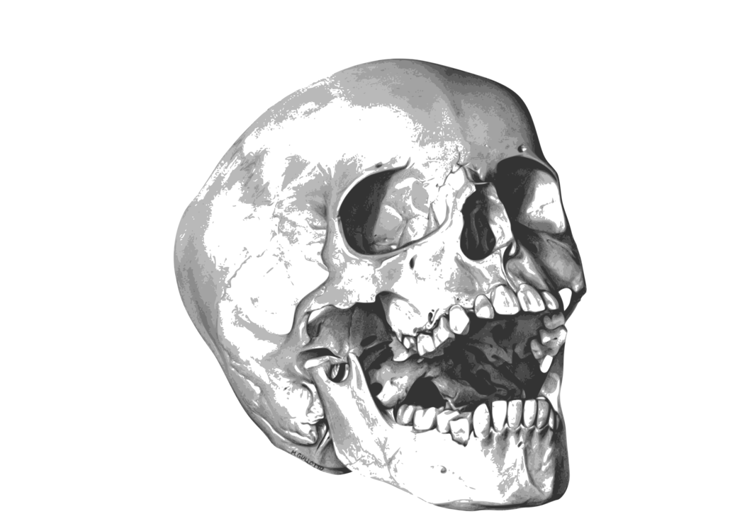 Head,Skeleton,Skull