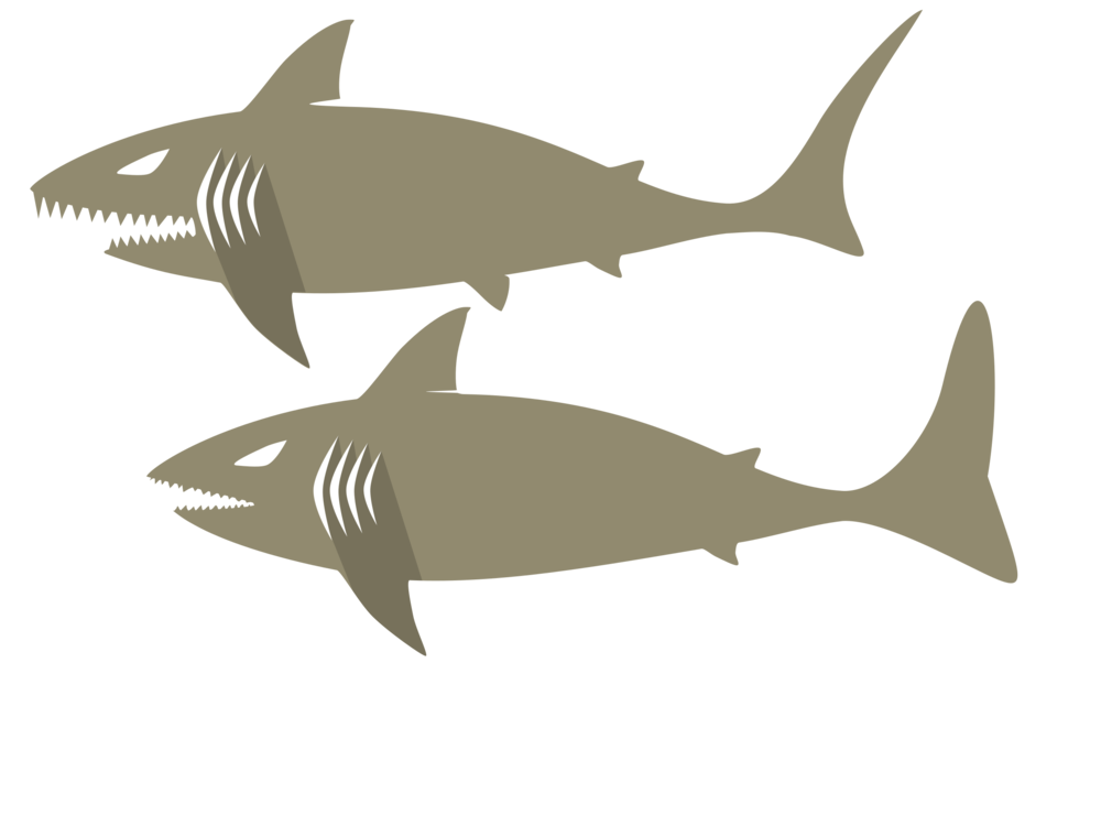 Marine Biology,Shark,Fin